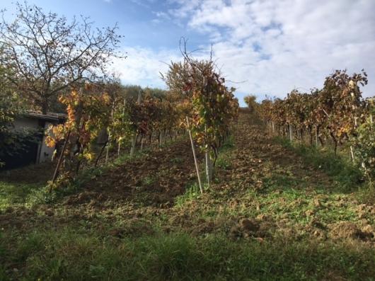 Terreno Agricolo in vendita a Coriano, 9999 locali, prezzo € 70.000   Cambio Casa.it