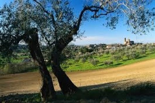 Terreno Agricolo in vendita a San Giovanni in Marignano, 9999 locali, zona Zona: Santa Maria in Pietrafitta, prezzo € 400.000   Cambio Casa.it