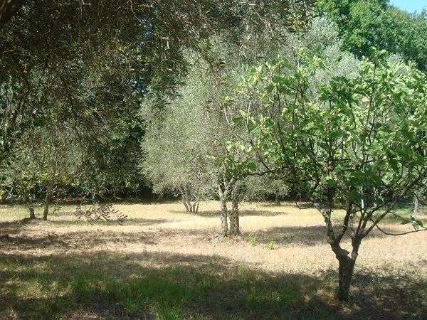 Terreno Agricolo in vendita a Fara in Sabina, 9999 locali, prezzo € 11.000 | CambioCasa.it
